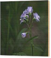 Jacob's Ladder Upper Buffalo Wilderness Wood Print