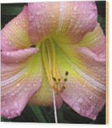 Jacqueline's Garden - Lily Glistening Wood Print