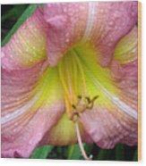 Jacqueline's Garden - Lily Glistening Thrice Wood Print