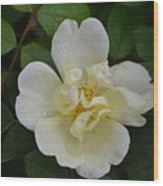 Jade And Ivory Wood Print