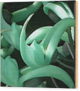 Jade Vine Wood Print