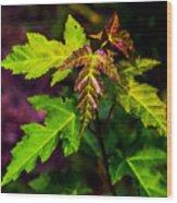 Jagged Leaves Wood Print