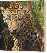 Jaguar Adolescent Wood Print