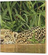 Jaguar Approaches Cayman Wood Print