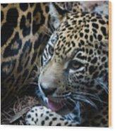 Jaguar Cub Wood Print