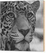 Jaguar In Black And White Wood Print