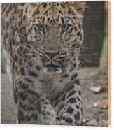 Jaguar On The Prowl Wood Print