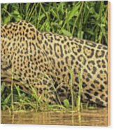 Jaguar Prowls The River's Edge Wood Print