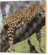 Jaguar Relaxation Wood Print