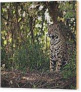 Jaguar Sitting In Trees In Dappled Sunlight Wood Print