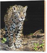 Jaguar Stare Wood Print