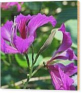 Jamaican Bloom Photograph   Wood Print