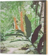 Jamaican River Wood Print