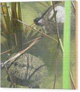 Jamaican Turtles Wood Print