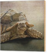 Jamal The Tortoise Wood Print