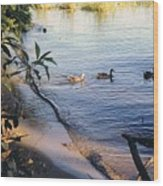 James River Ducks In A Row Wood Print
