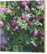 Jane's Rose Bush Wood Print