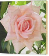 Janet's Pink Rose Wood Print