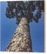 Janiculum Wood Print