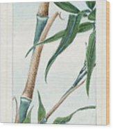 Japan: Bamboo, C1870s Wood Print