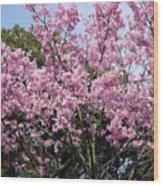 Japan Blossoms Wood Print