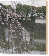 Japan Cherry Tree Blossom Wood Print