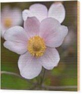 Japanese Anemone Wood Print