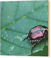 Japanese Beetle Wood Print