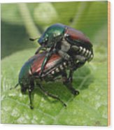 Japanese Beetles Mating Wood Print
