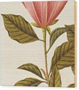 Japanese Bigleaf Magnolia Wood Print