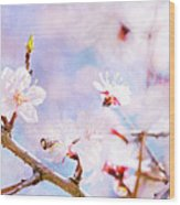 Japanese Cherry - Sakura In Bloom Wood Print