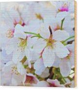Japanese Cherry Tree Blossoms 2 Wood Print