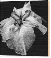Japanese Iris In Black And White Wood Print