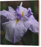 Japanese Iris In Bloom Wood Print