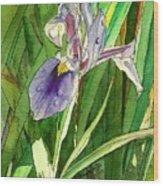 Japanese Iris Wood Print