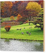 Japanese Island Fall Colors Wood Print
