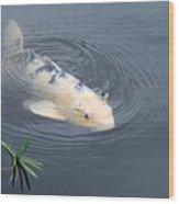 Japanese Koi Fish Wood Print