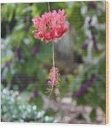 Japanese Lantern Hibiscus Wood Print