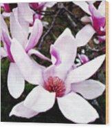 Japanese Magnolia Wood Print