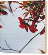 Japanese Maple 1589 Wood Print