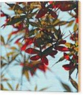 Japanese Maple 1592 Wood Print