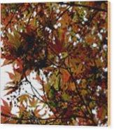 Japanese Maple 2011-1 Wood Print