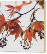 Japanese Maple 2011-2 Wood Print