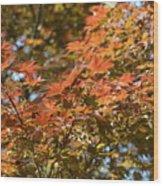 Japanese Maple Beauty Wood Print