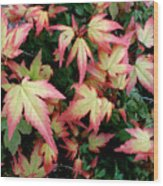 Japanese Maple Wood Print by Cynthia Adams
