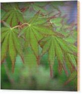 Japanese Maple Foliage Wood Print