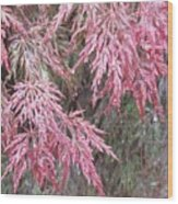 Japanese Maple In The Rain Wood Print