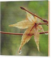 Japanese Maple In The Rain Wood Print