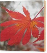 Japanese Maple Leaf 1 Wood Print