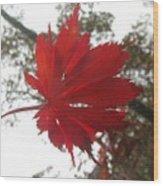 Japanese Maple Leaf 2 Wood Print